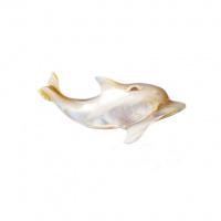 Delfino in Madreperla